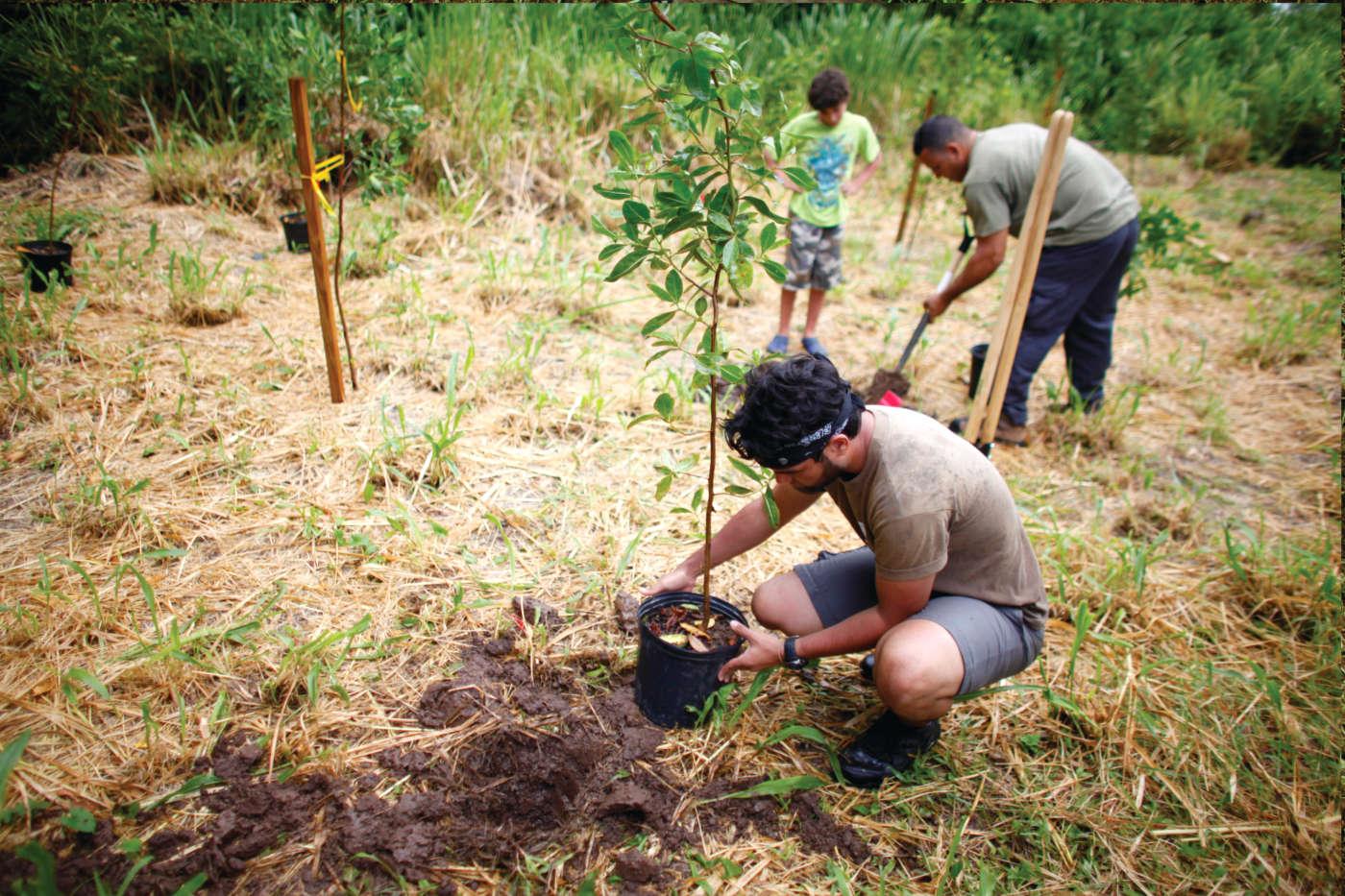 siembra-y-reforestacion-mmd