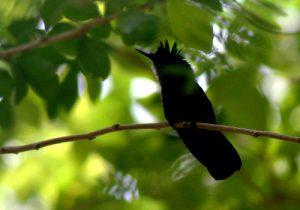 Censos-de-aves