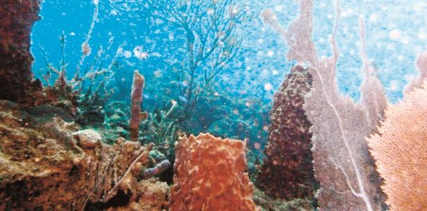 arrecifes de corales de Maldivas
