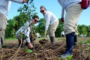 Nos lanzamos a reforestar