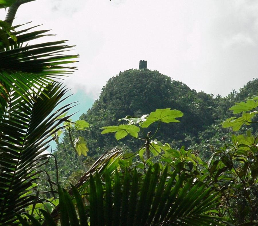 bosques-tropicales-yunque-monte-britton-sum