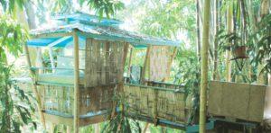 hospederia-tropical-treehouse