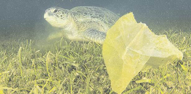 tortugas-marinas2