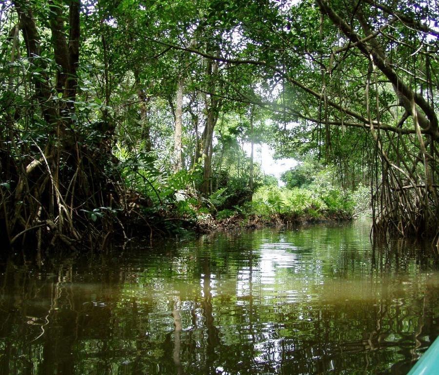 Reserva Natural Cano Boquilla en Mayaguez