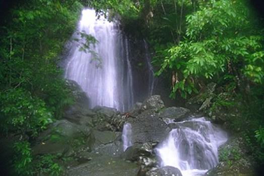 Día Internacional de los Bosques Cascada La Coca El Yunque