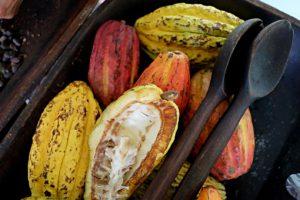 Hacienda Buena Vista cacao chocolate