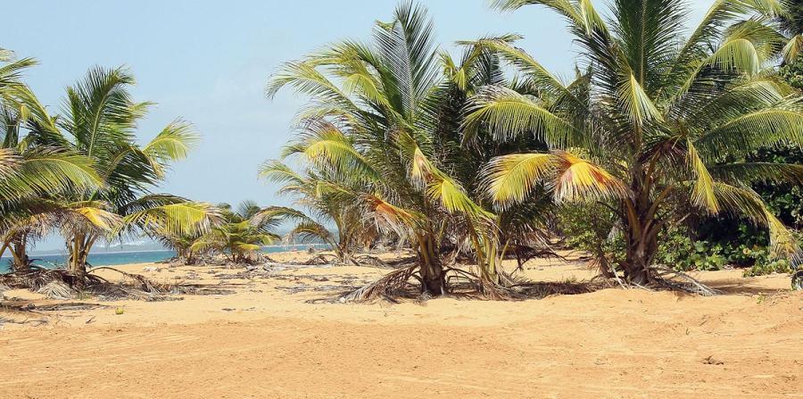 costa de Luquillo