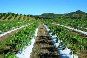 escuela superior especializada vocacional agricola Pablo David Burgos Marrero