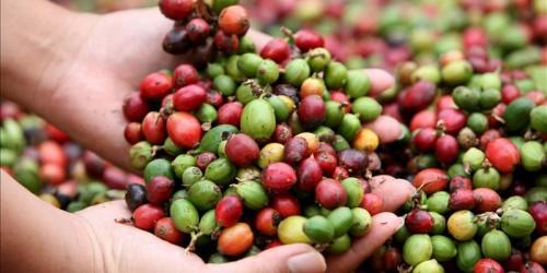 exportacion del cafe