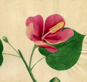 Tesoro de flora