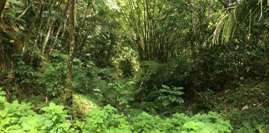 Bosque Estatal Carite
