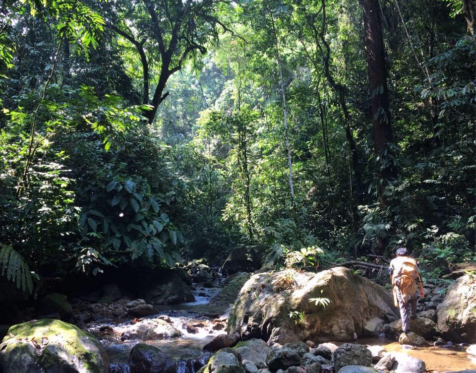 Harimau-Conservation ecosistemas
