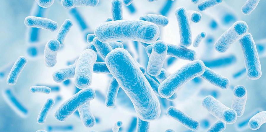bacterias en la digestion