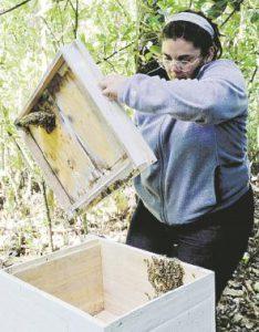 abejas colmena