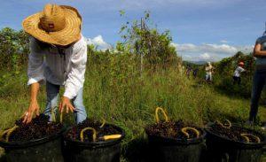 cooperativas sector agrario