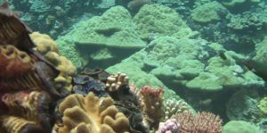corales en Monumento Nacional Papahanaumokuakea Hawai