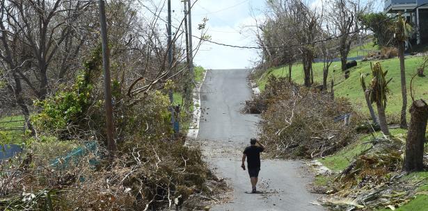 arboles caidos tras el paso de un huracan