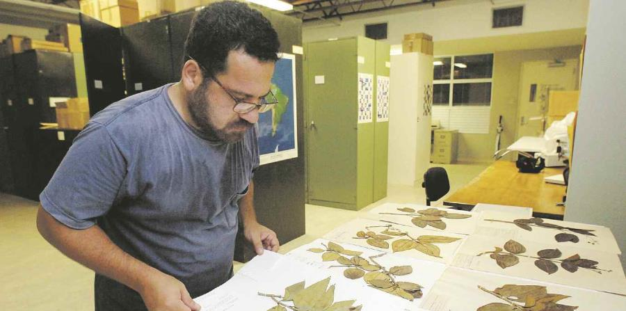 herbario de la UPR