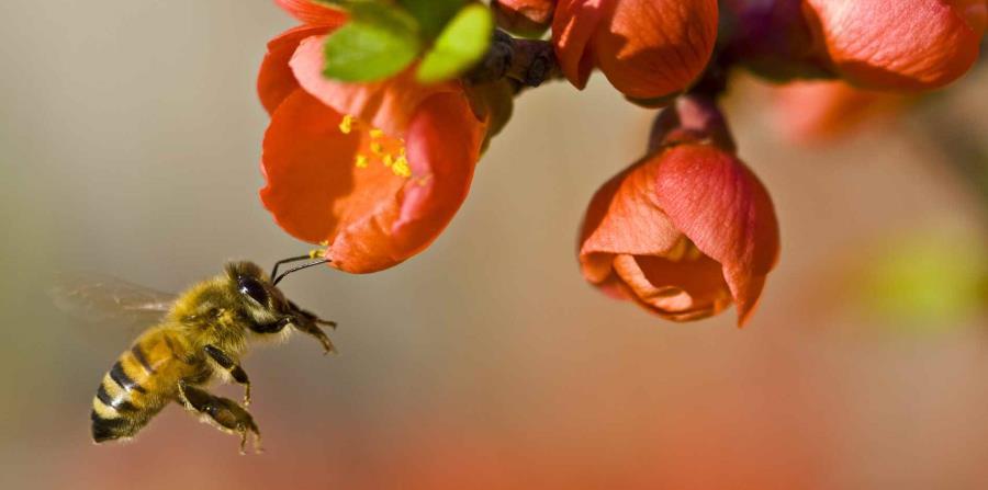 abejas agricultura sustentable