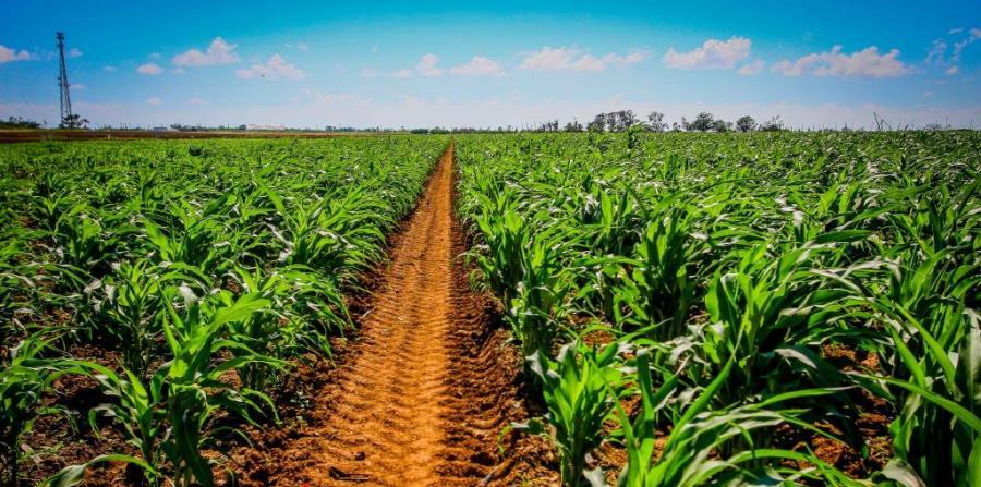 biotecnologia agricola