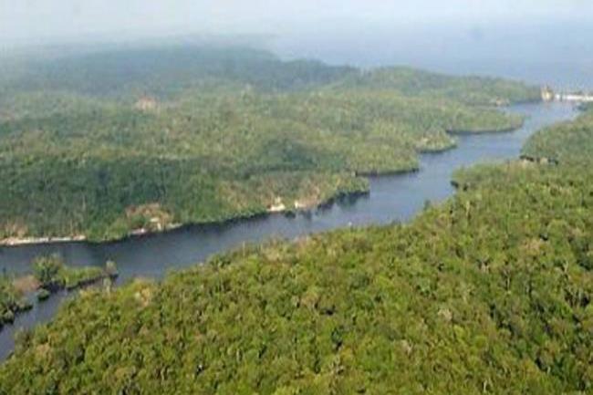 primera ave hibrida del Amazonas