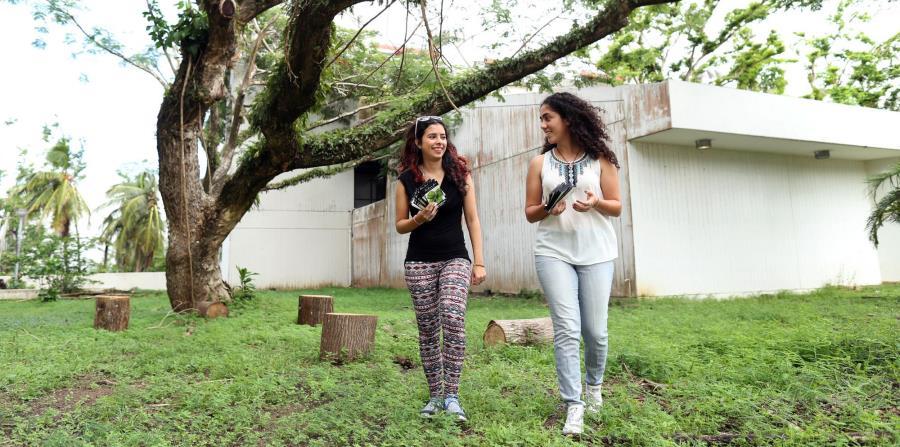 reforestar Puerto Rico