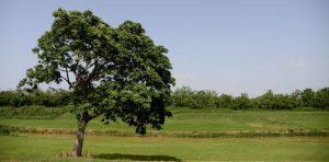 4000 arboles para reforestar