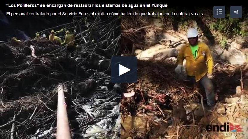 Los Polilleros laboran reapertura El Yunque