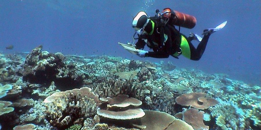 arrrecife corales artificiales