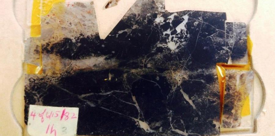 fosil mas antiguo del mundo