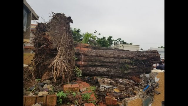 madera derribada