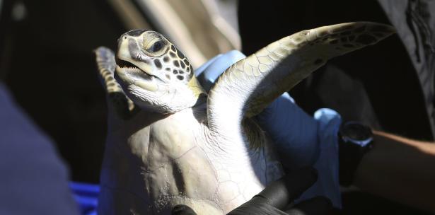 tortugas florida
