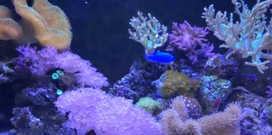 arrecifes corales