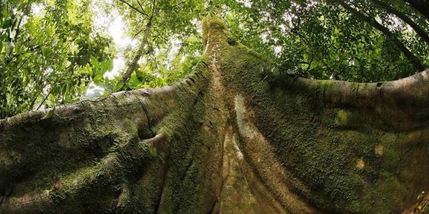 bosque tropical en Latinoamerica