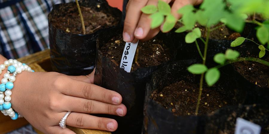 escuela Agroecologica Laura Mercado de San German