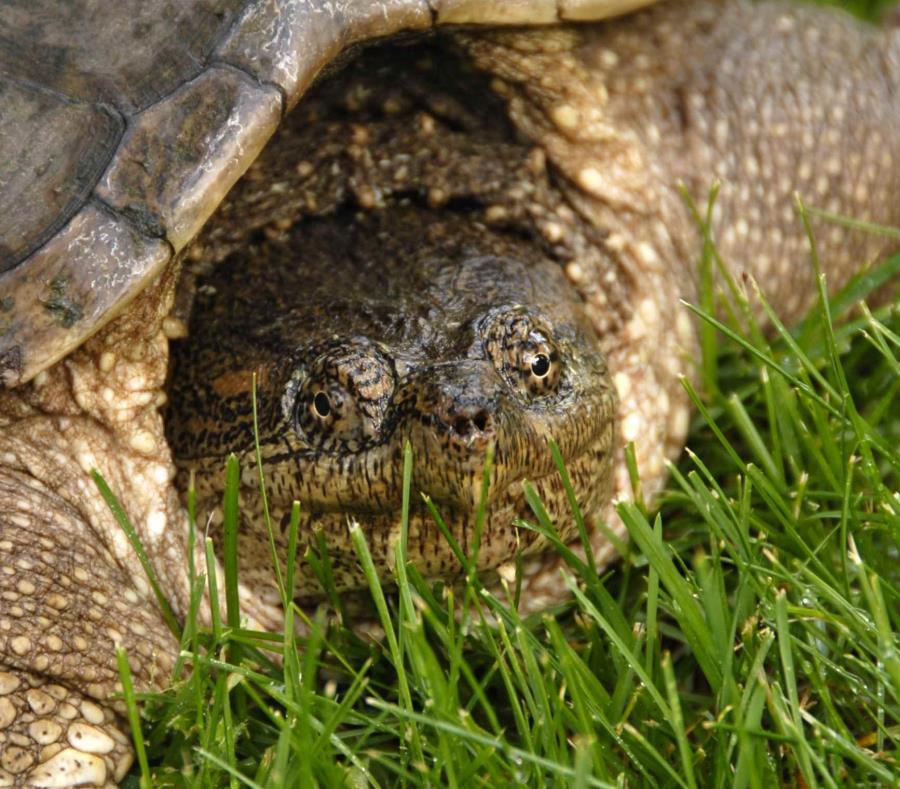 huellas de tortugas fosiles