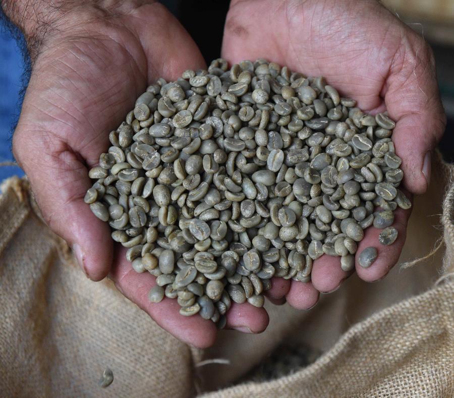industria del cafe
