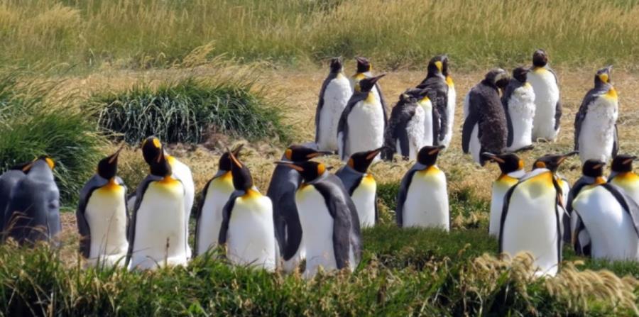 pinguinos cambio climatico