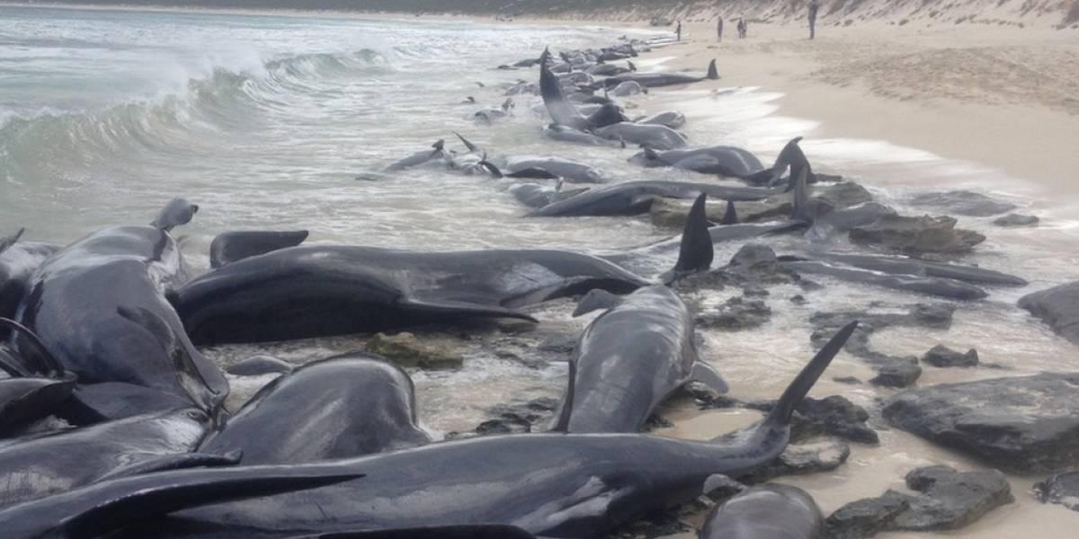 ballenas varadas en una playa de Australia