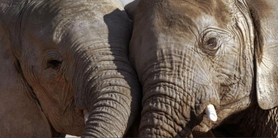 elefantes cambio climatico