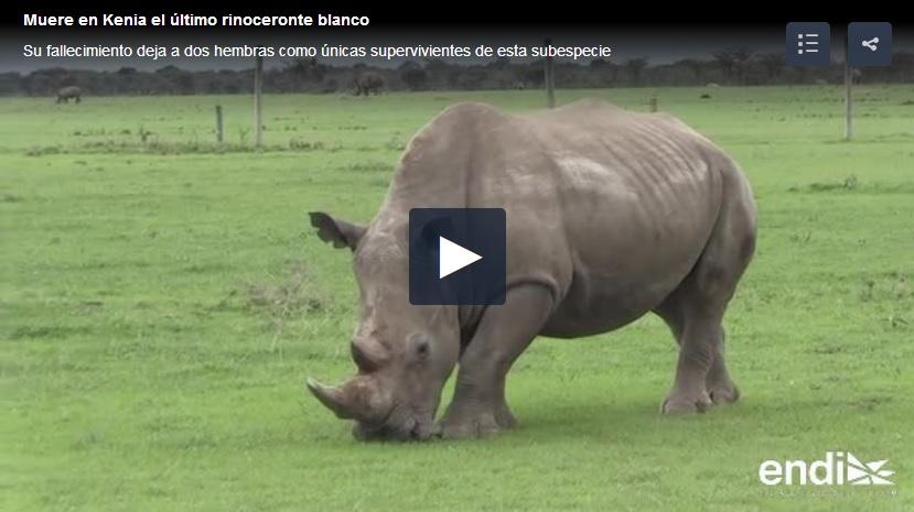 muere sudan ultimo rinoceronte blanco