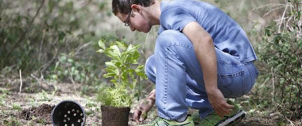 Siembra de árboles nativos
