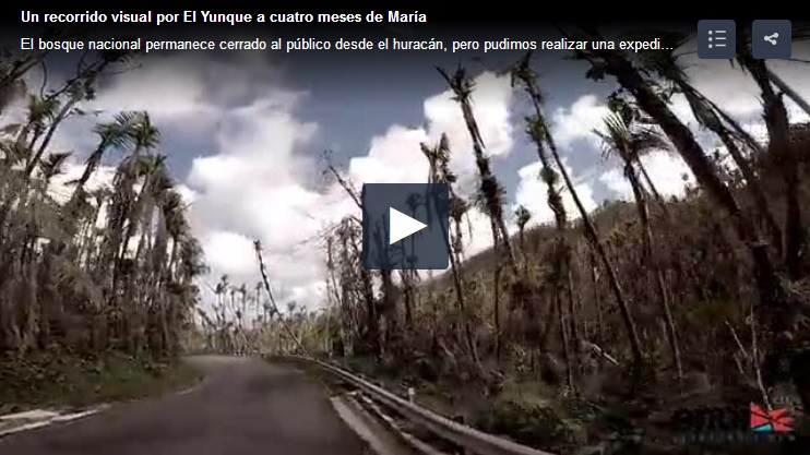 bosque nacional El Yunque Puerto Rico