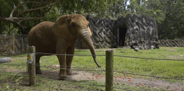 elefanta Mundi parque Mayaguez Puerto Rico