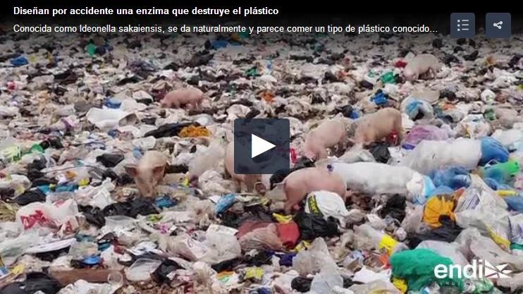 enzima que destruye el plastico