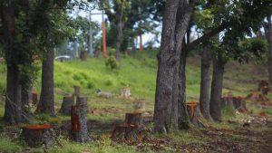 plan de reforestacion Puerto Rico Para La Naturaleza