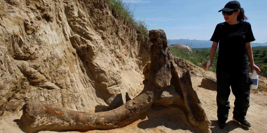 restos elefante prehistorico en Macedonia
