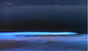 Criaturas bioluminicentes iluminan las aguas del sur de California