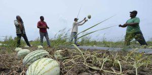 agricultores industria agricola