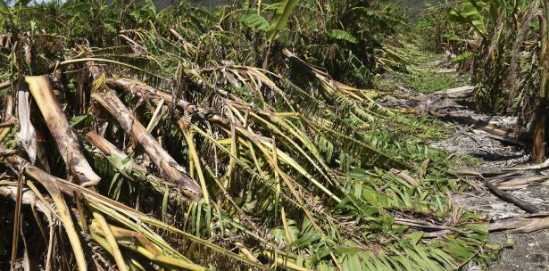huracan cosechas puertorriquenas